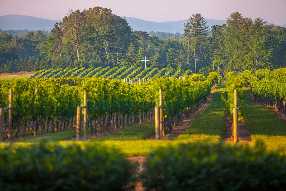 cross-and-vineyard-panorama-3 (1).jpg