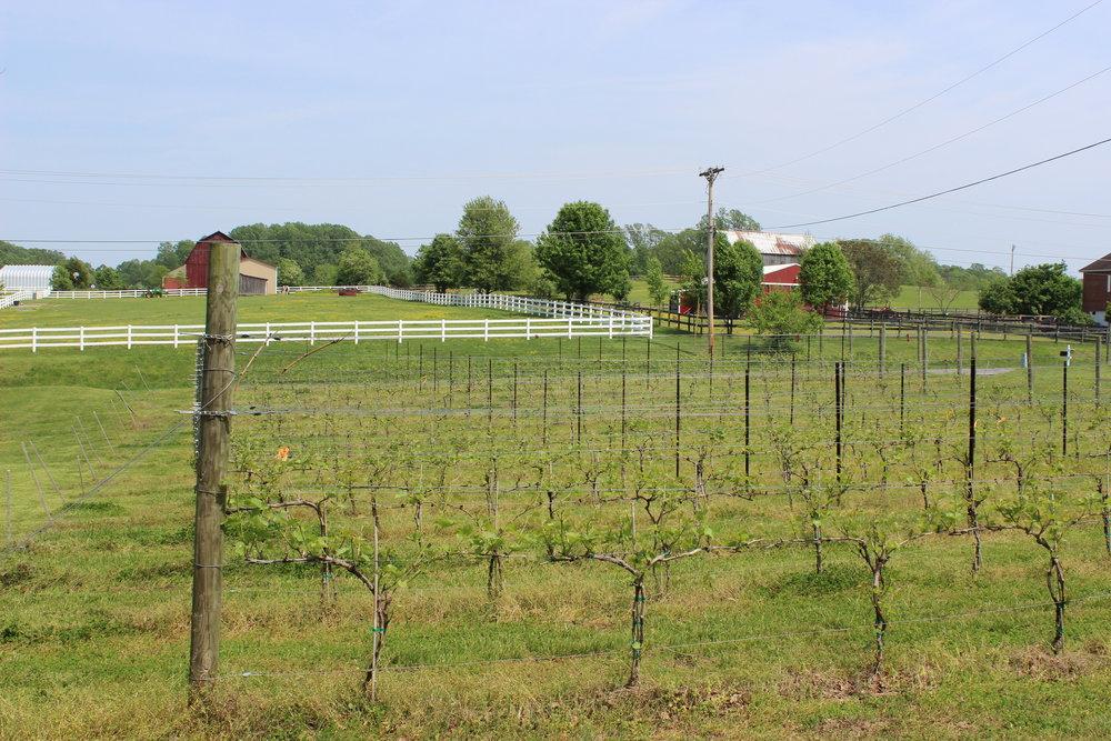 Robin Hill Farm and Vineyards