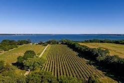 Corey Creek Vineyards