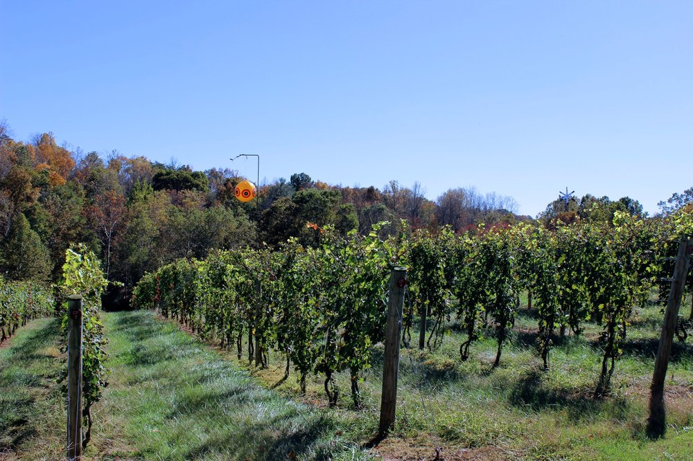 Magnolia Vineyards