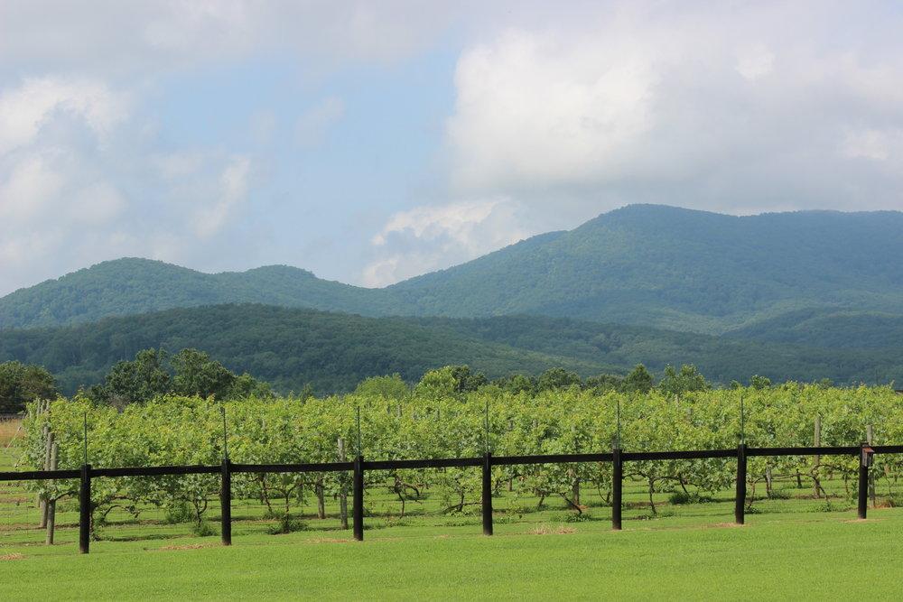 Mountain View Vineyard
