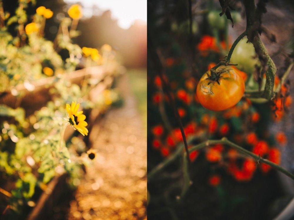 Atlanta family photography, tomatoes, wildflowers
