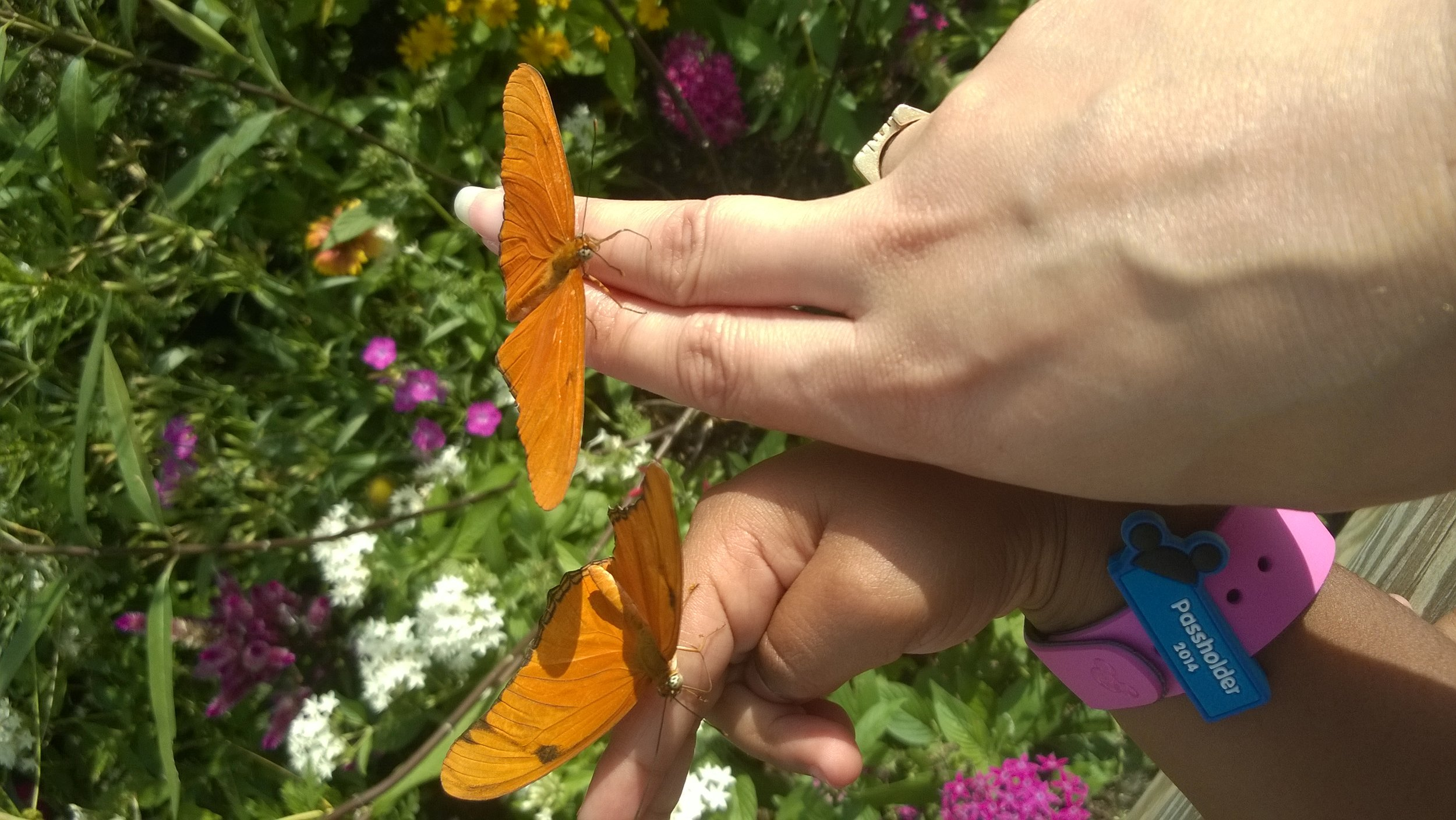 Two_Butterflies