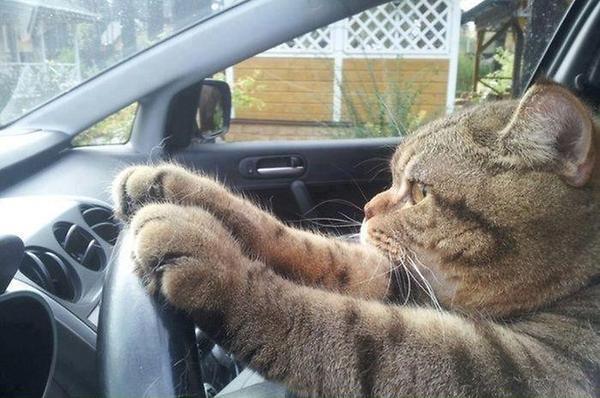 Cat-Driving-Car