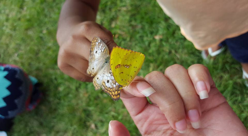 Butterflies-In-Hands.jpg