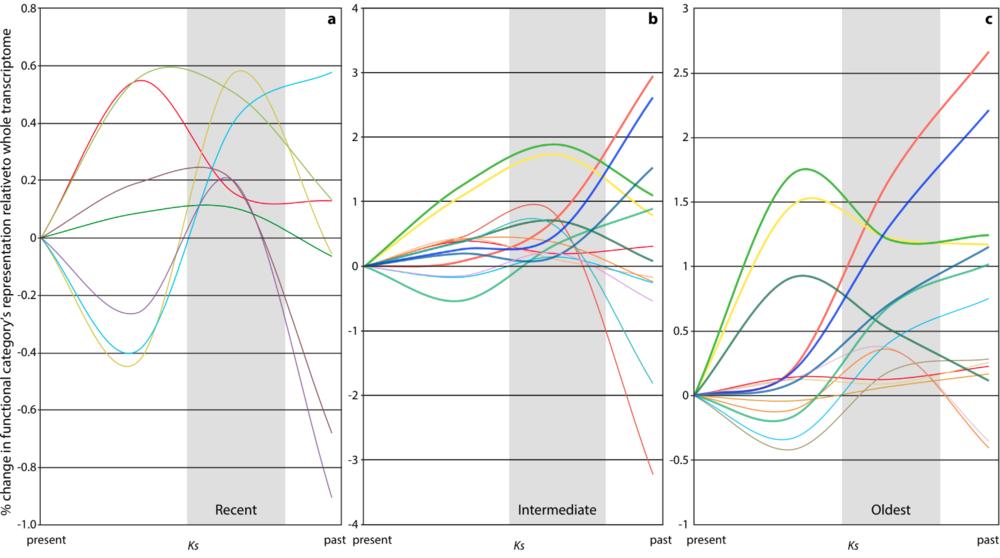 Differential gene retention and loss following WGDs in the Compositae (Sessa et al. in prep).