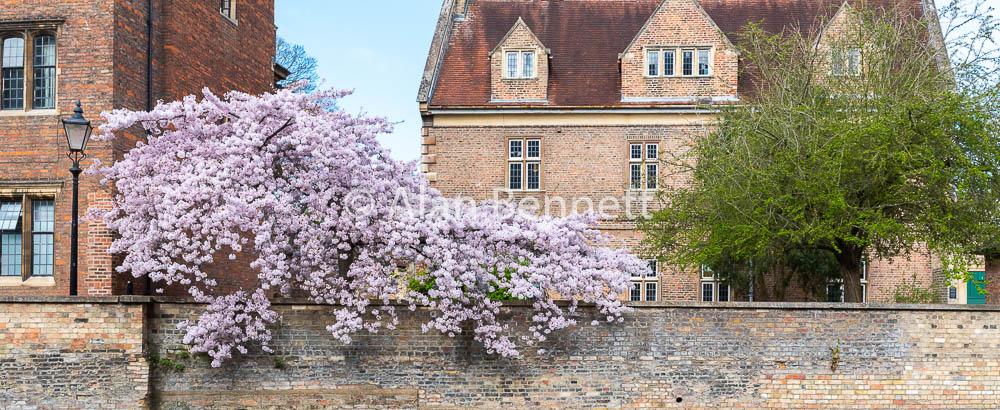 Cambridge-stock-images-223.jpg