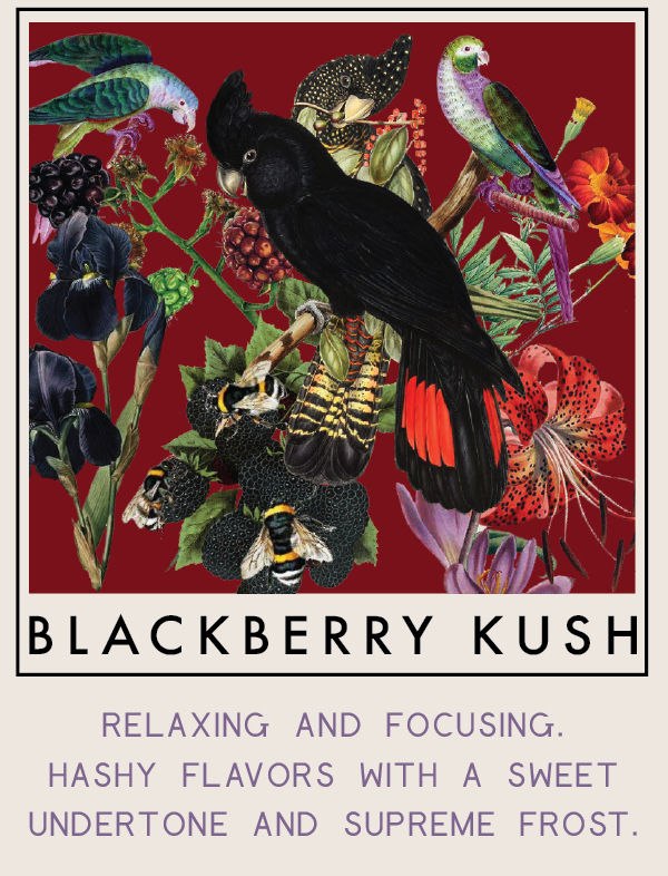 blackberrykush-01.png