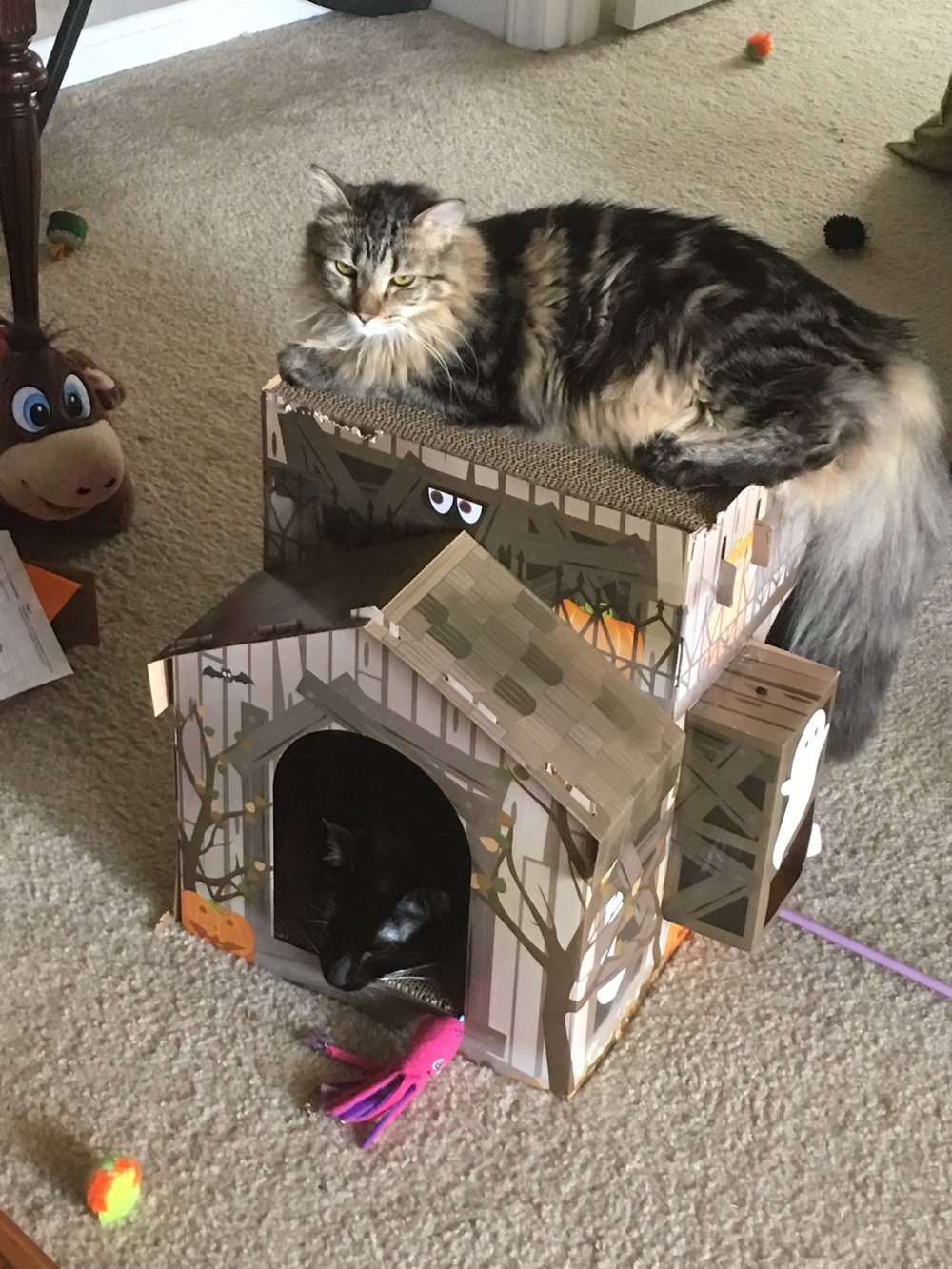 Gordie in the Halloween house, and Theo on top. (They are, in fact, named after hockey legends Gordie Howe and Theo Flurry.)