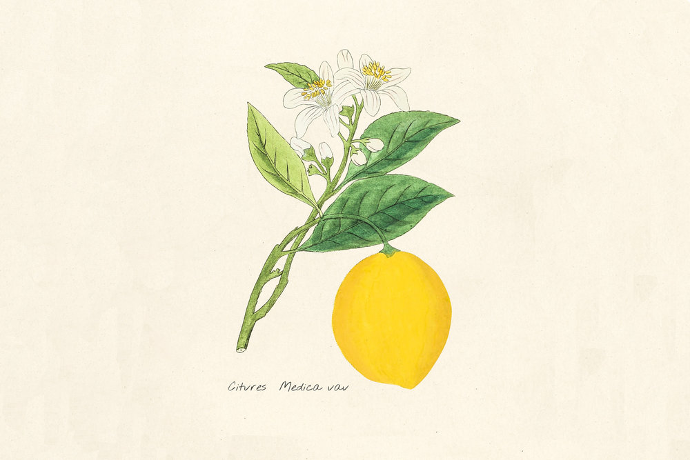 lemon-product.jpg