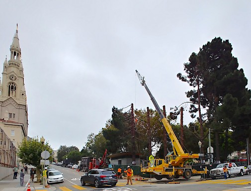Trees are removed at the corner of Powell and Filbert Streets in North Beach.   Photo: Joe Bonadio