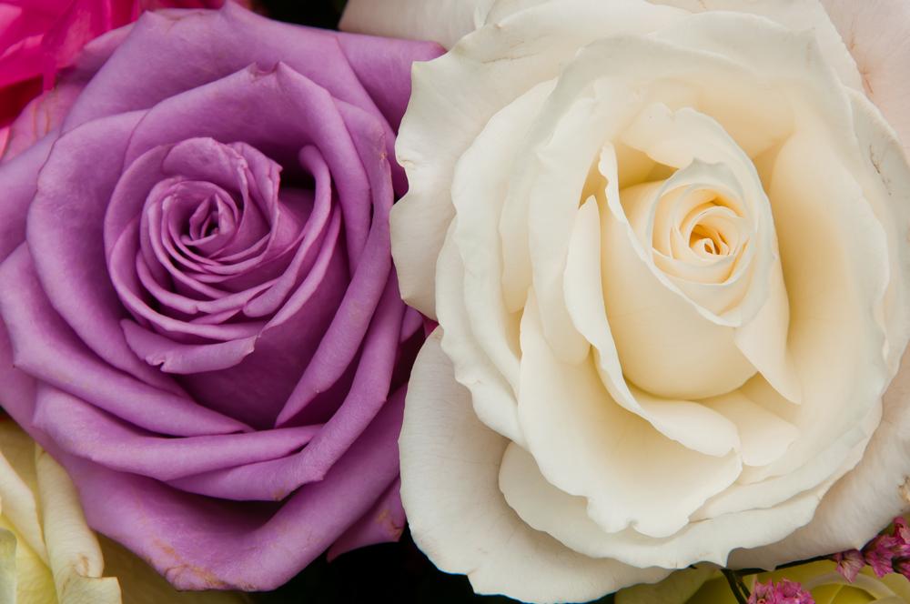 roses 14.jpg