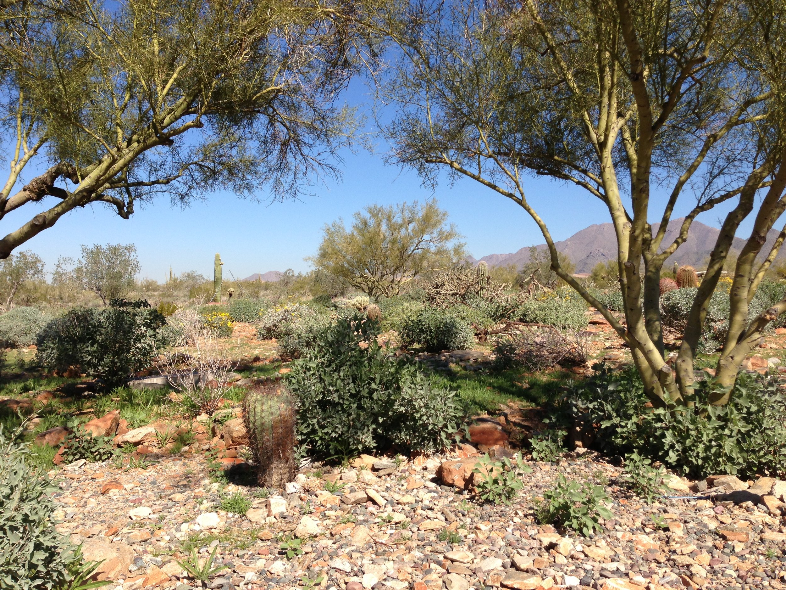 Cacti, mesquite and ironwood trees as far as the eye can see.