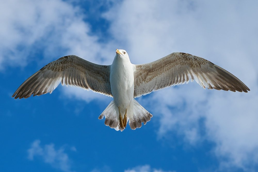 seagull-1511862_1280.jpg