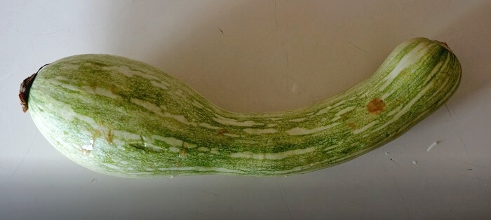Marrow is widely available in Cyprus during summer months