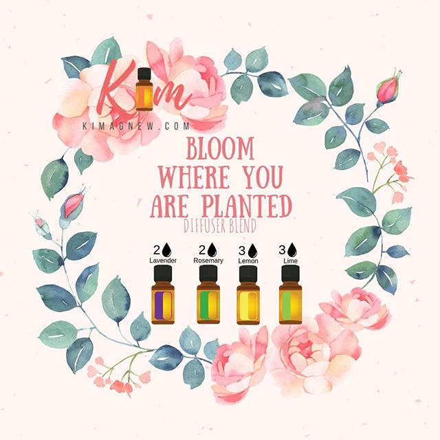You are beautiful. BLOOM!⠀⠀⠀⠀⠀⠀⠀⠀⠀ ⠀⠀⠀⠀⠀⠀⠀⠀⠀ 2 drops Lavender for Calm, Emotionally honest, Peace of mind⠀⠀⠀⠀⠀⠀⠀⠀⠀ 2 drops Rosemary for mental clarity, knowledge, being teachable, enlightened with the ability to adjust⠀⠀⠀⠀⠀⠀⠀⠀⠀ 3 drops Lemon for Focus, Mental Clarity and Joy⠀⠀⠀⠀⠀⠀⠀⠀⠀ ⠀⠀⠀⠀⠀⠀⠀⠀⠀ #bloomwhereyouareplanted #bloom #doterra #essentialoils #natural #health⠀⠀⠀⠀⠀⠀⠀⠀⠀ ⠀⠀⠀⠀⠀⠀⠀⠀⠀ 3 drops Lime for Courage, Engaging, Determined, Grateful for Life