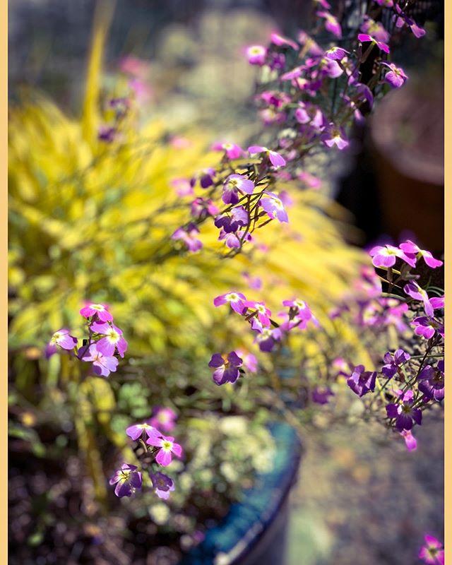 Flowers in Kalara's garden today.