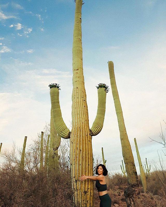 Go to Saguaro. Hug a 🌵✔️