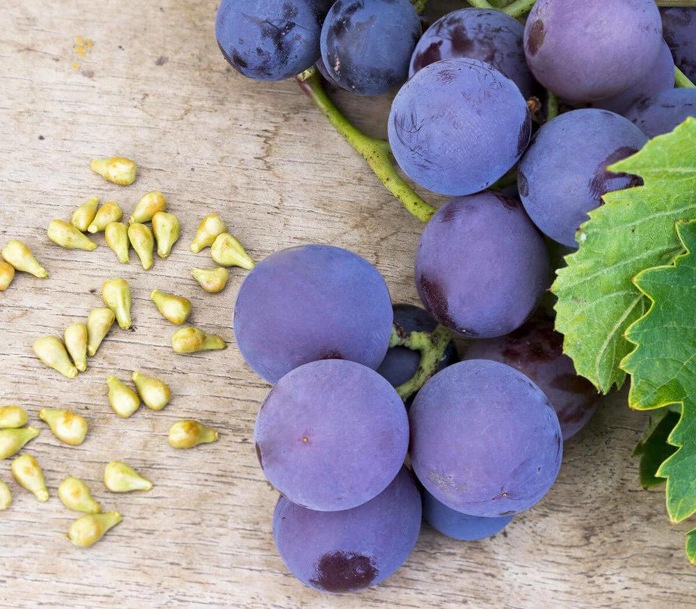 grape2_4000x3270-1200x1050.jpg