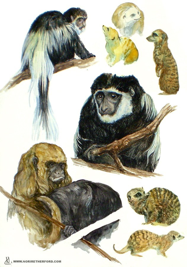 Monkeys & Meercats
