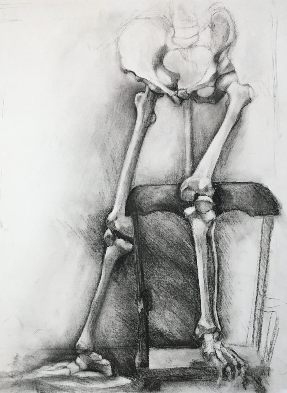 Skeleton Study - Lower Body