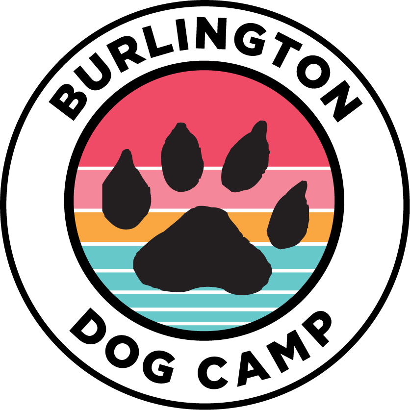 Burlington Vermont | Burlington Dog Camp