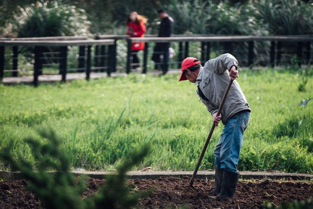 Local farmer in near the flower field of Zhuzihu at Yangmingshan National Park