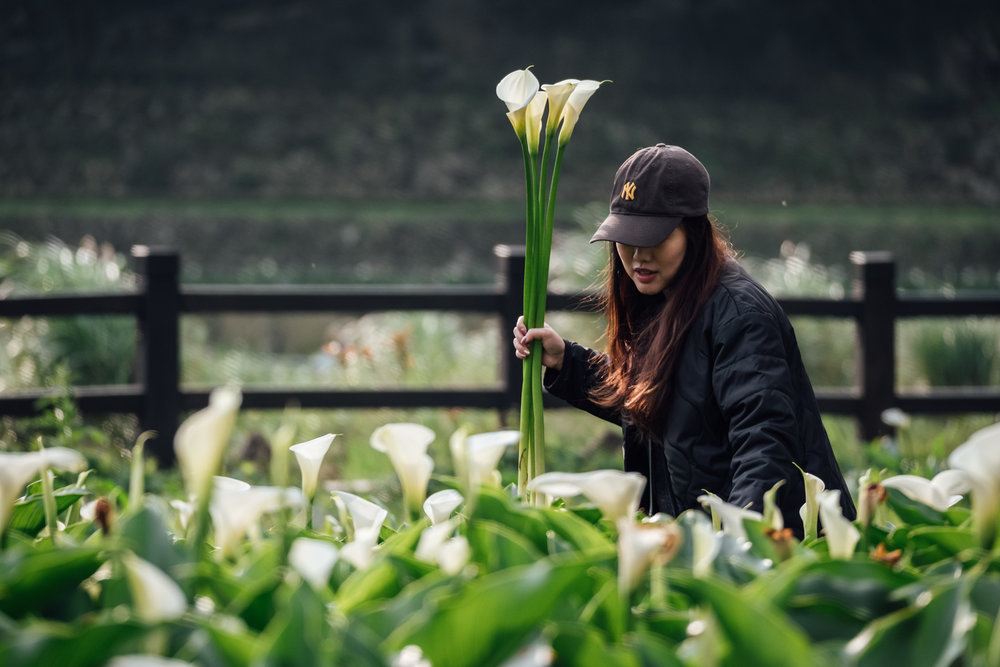 You can pay to pick up Calla Lillies yourself at Zhuzihu in Yangmingshan National Park