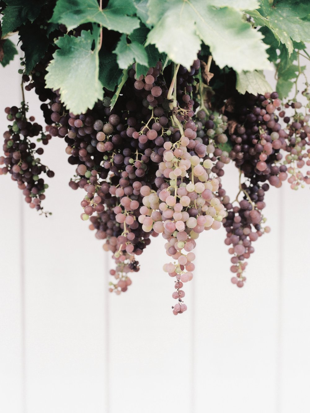auld-wines