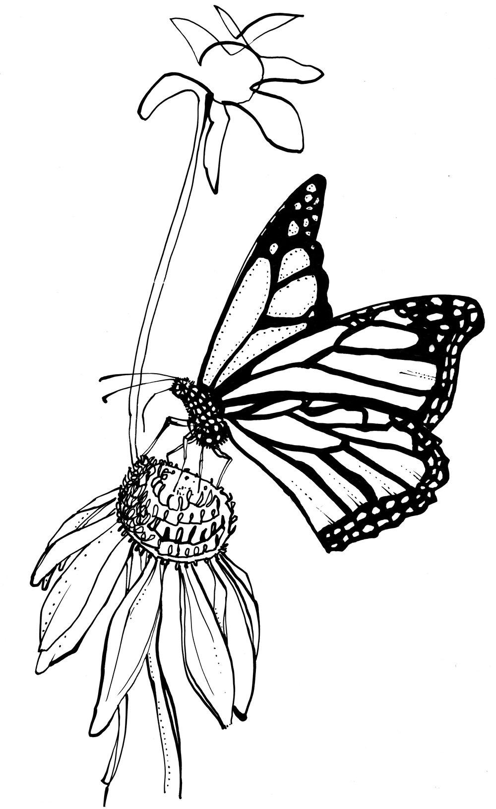 04.monarch_2.jpg
