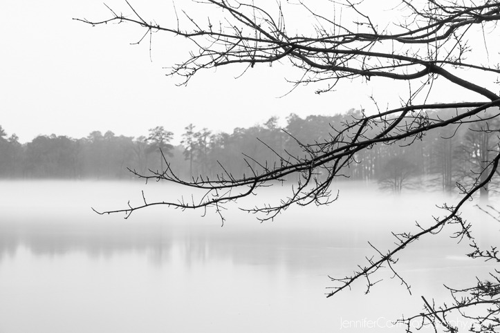 black and white photography, virginia beach photographer, stumpy lake pictures
