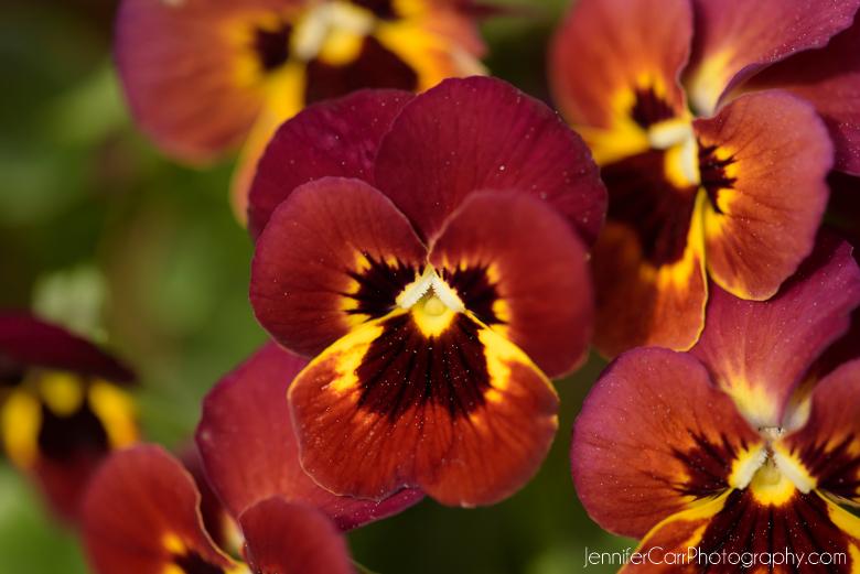 春天,诺福克植物园,花卉摄影,微距