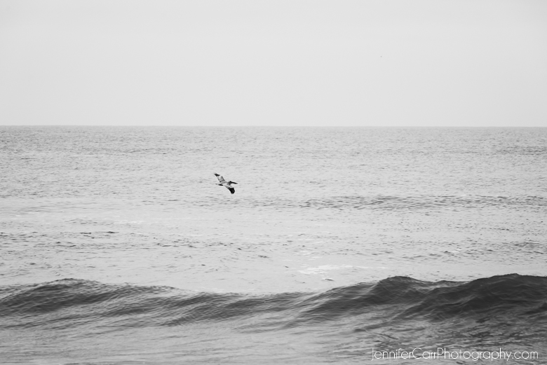 black and white photography, wave, ocean, bird