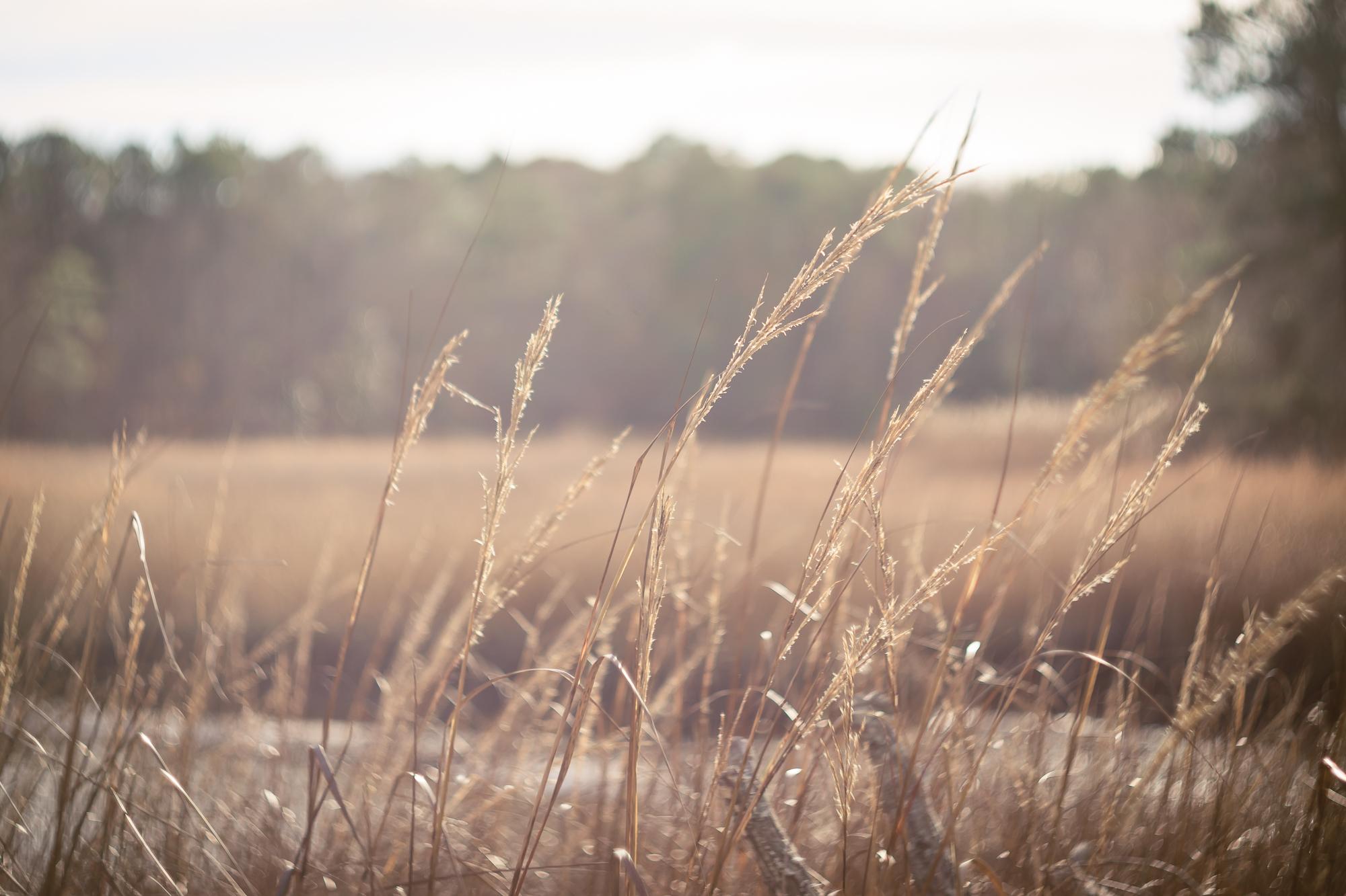 萨福克美术摄影,弗吉尼亚海滩摄影师,温莎城堡公园