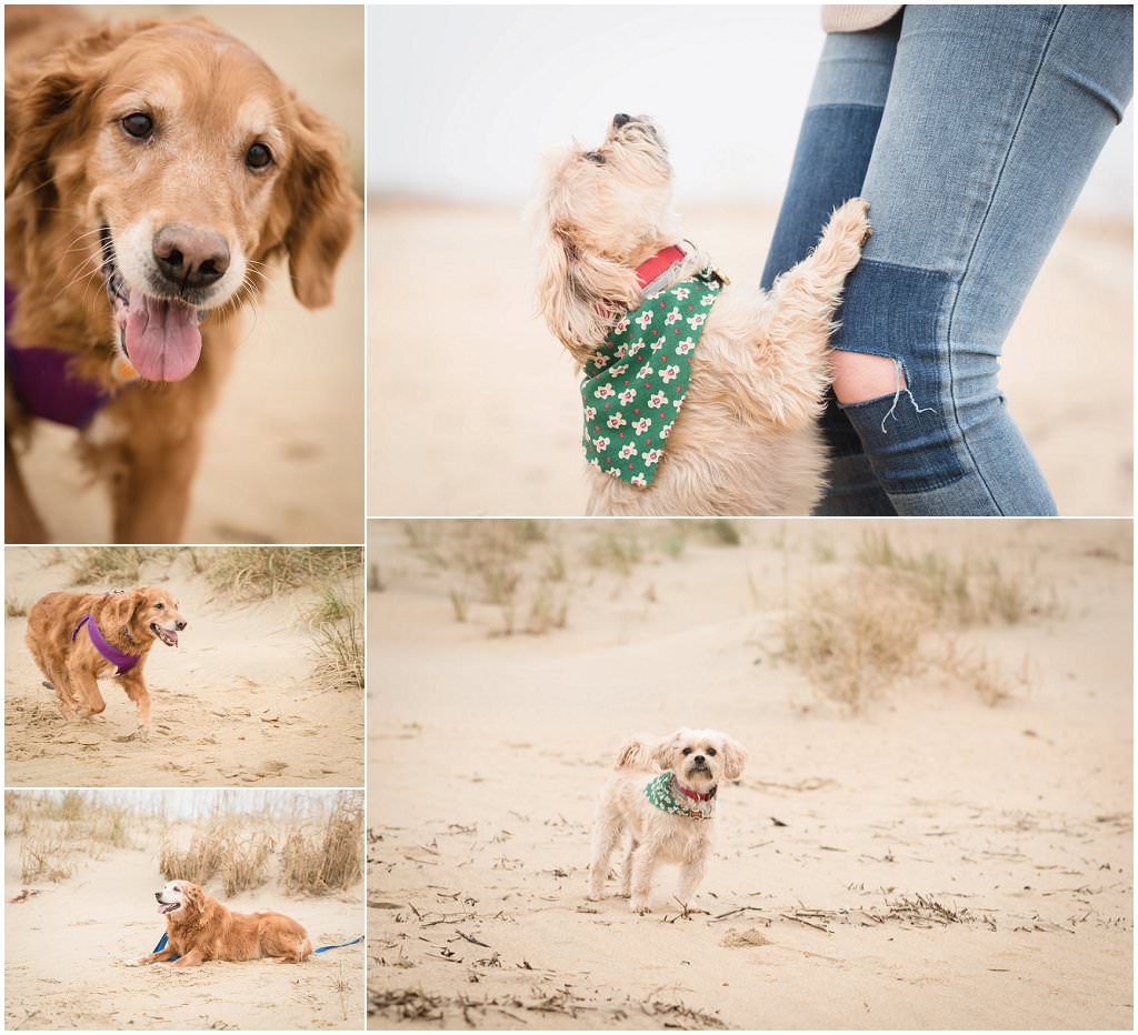 family and pet portraits, virginia beach photography,