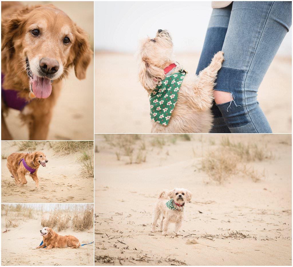 家庭和宠物肖像,弗吉尼亚海滩摄影,