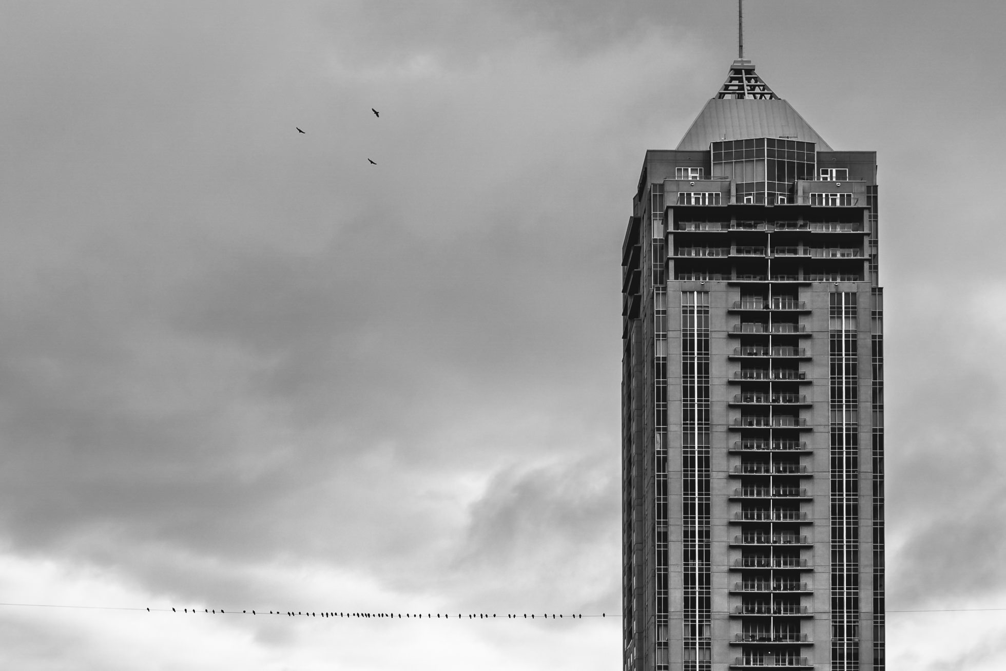 black and white photography, architecture, street, birds, virginia beach photographer