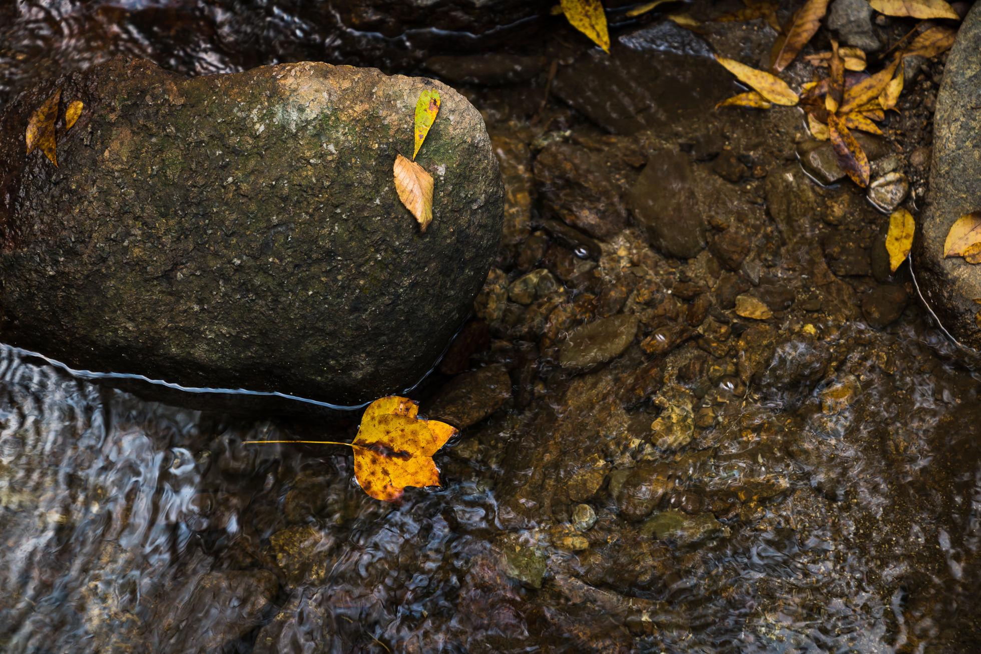 crabtree falls campground stream, tye rive, fallen leaf