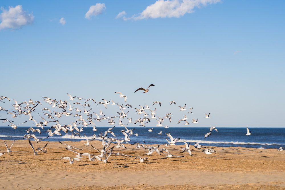 beach, virginia beach photography, nature photographer, seagulls