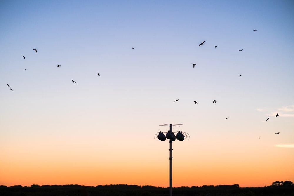 sunset at back bay national wildlife refuge, birds, purple martins, sandbridge, virginia beach