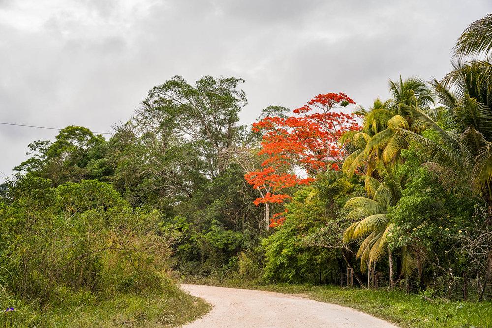 2018.05.06 Hidden Valley Inn Cayo Belize © Jennifer Carr Photography Virginia Beach-34.jpg
