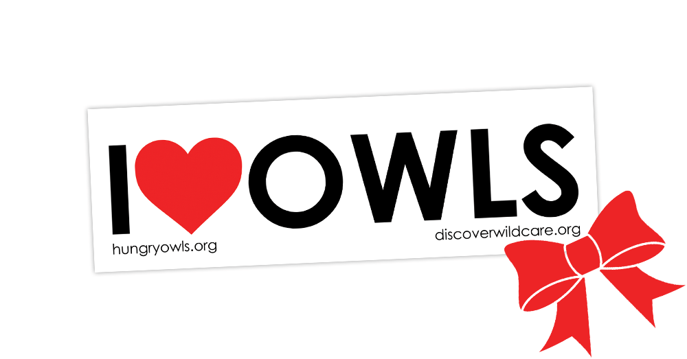 Stocking Stuffer for Owl Lovers — Hungry Owl Project
