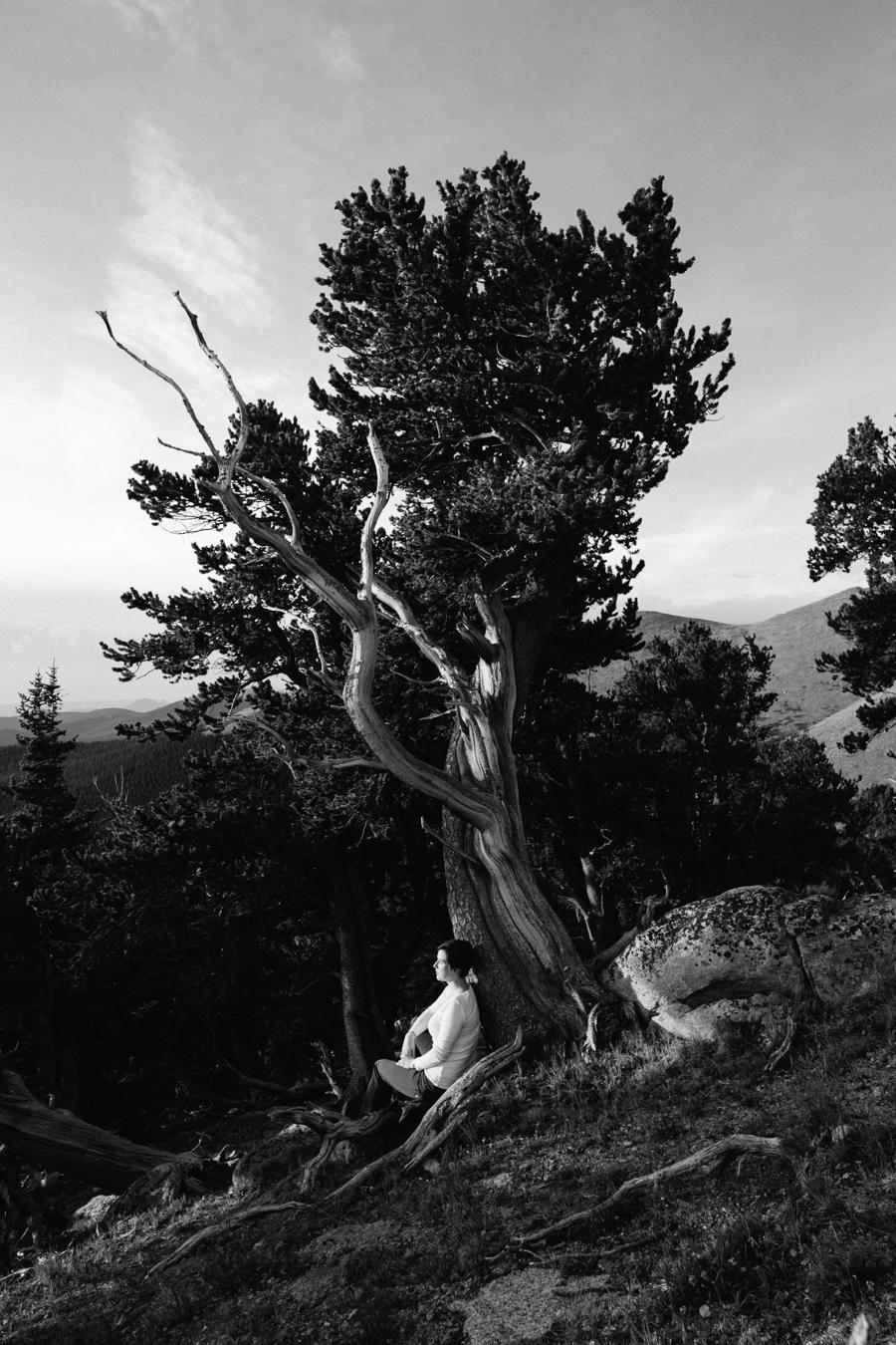 Bristlecone-2.jpg