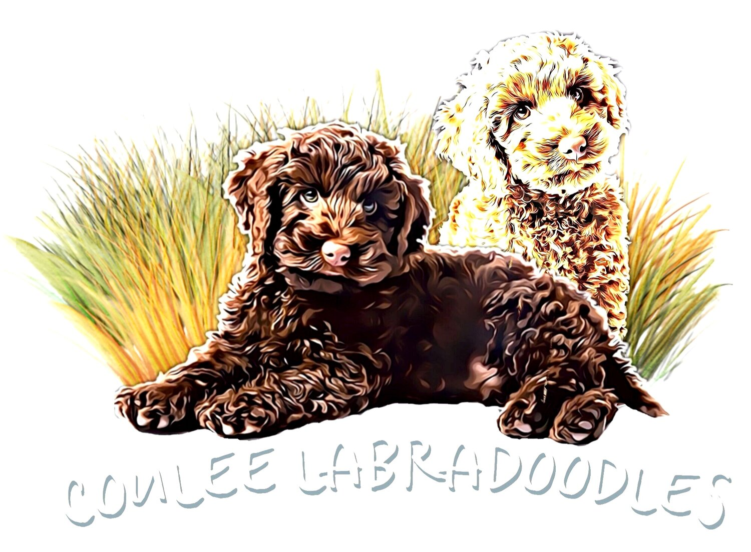 Coulee Labradoodles