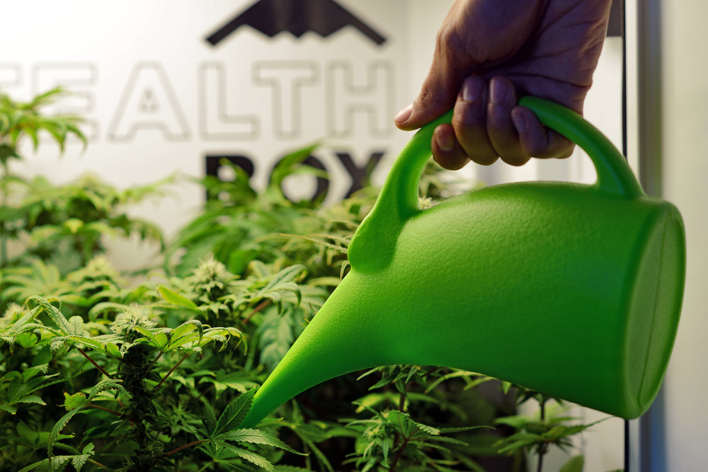Got Questions?Ask a greenthumb! - Ask one of our Growmasters any questions that you might have about growing with Stealth Box. Get the information you need before making the decision to purchase! Just use the chat in the bottom left hand side of the site to get an instant response during business hours.