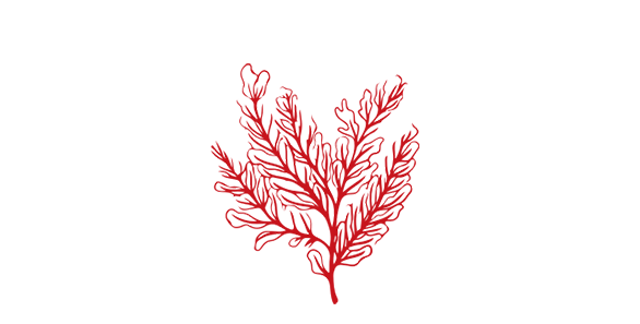 Sea Fern Icon.png