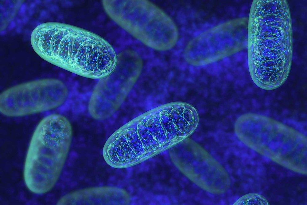 shutterstock_mitochondria_Web.jpg
