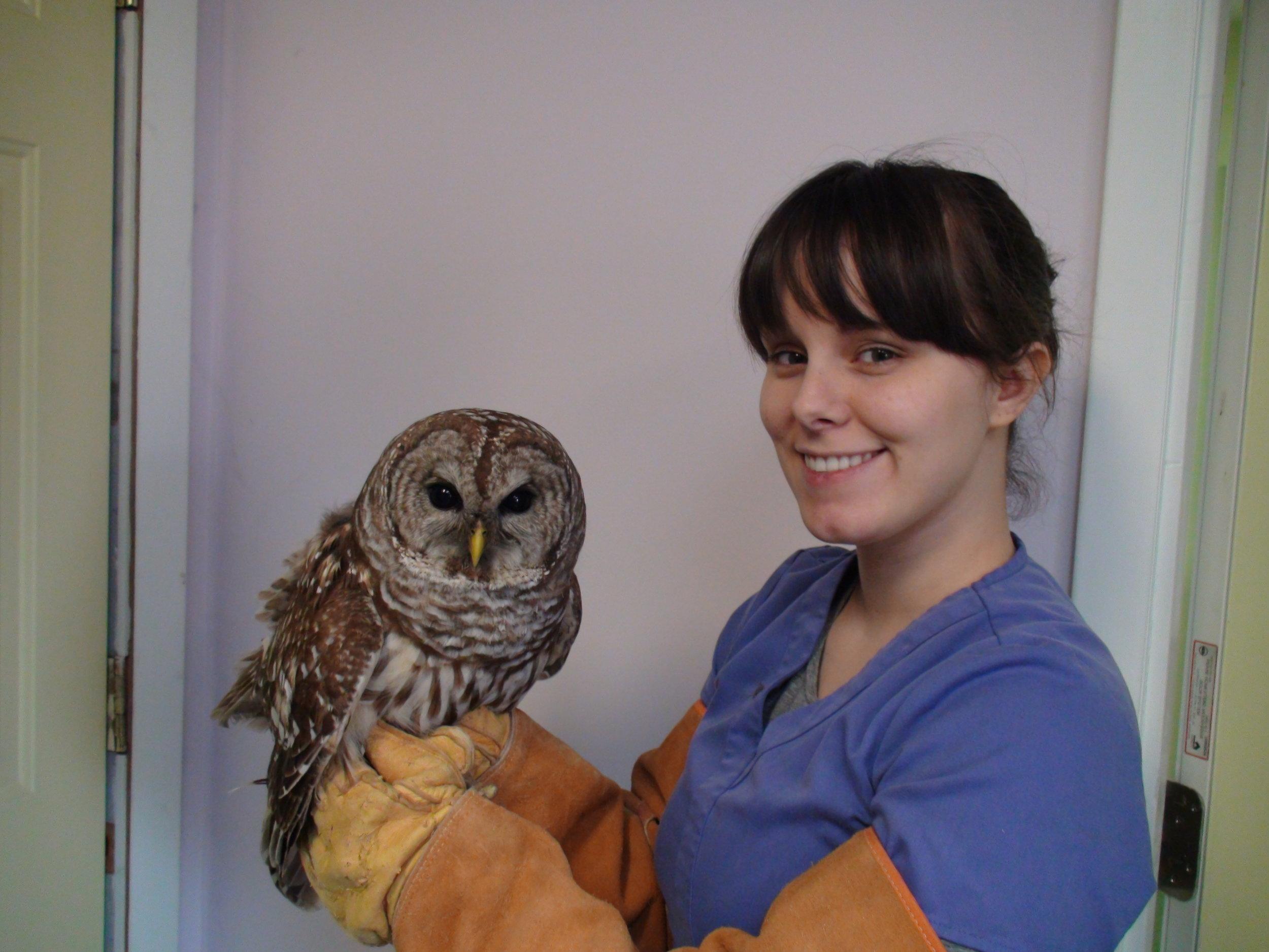 Cori Barred Owl