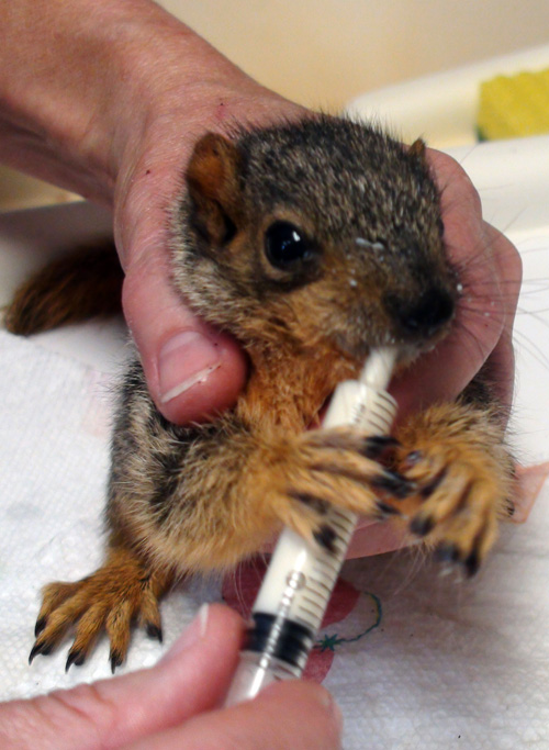 HFSquirrel
