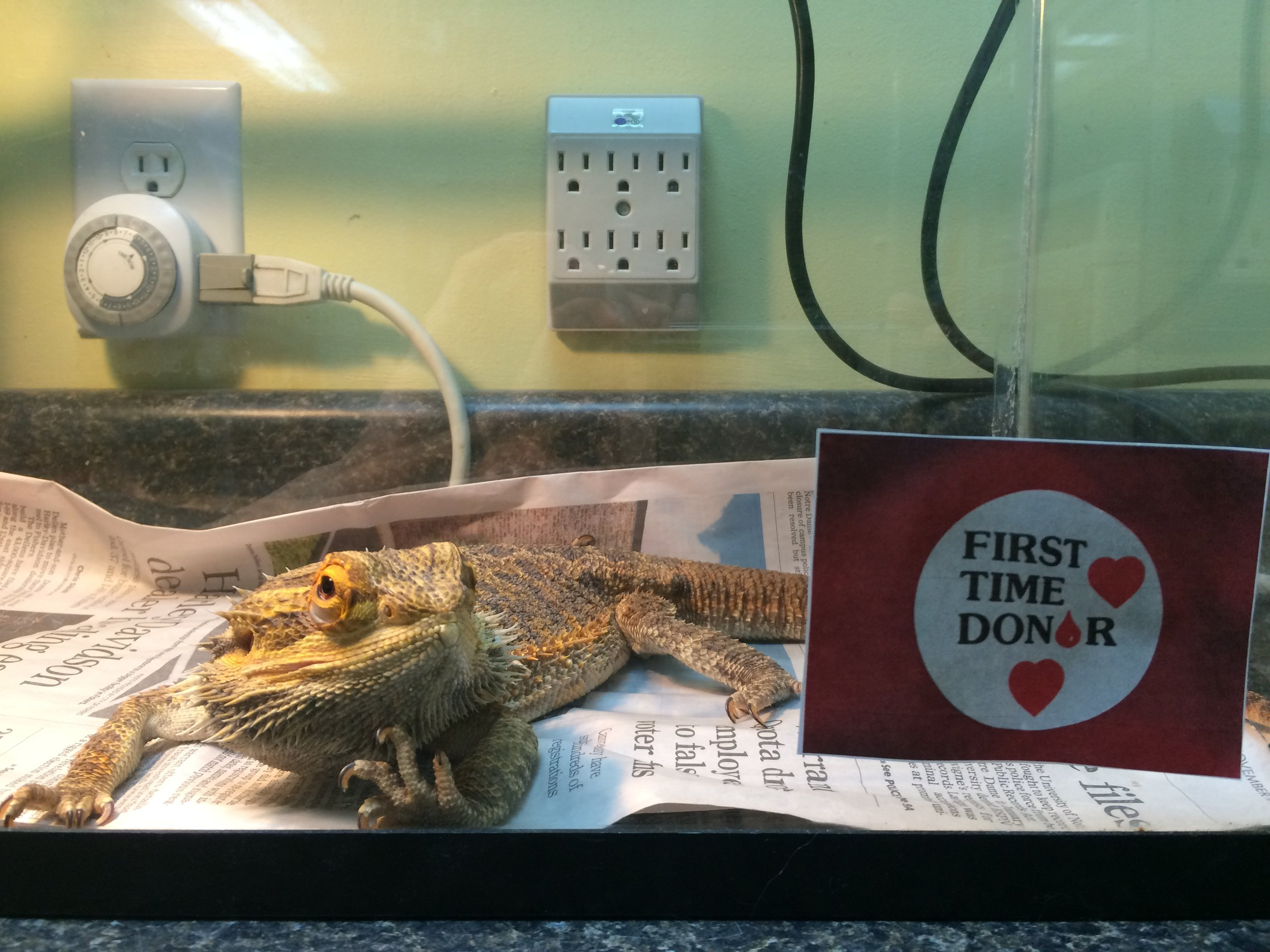 "Here is ""Chain"" resting after his donation. Since he is a big, healthy dragon, collecting blood from him was easy."